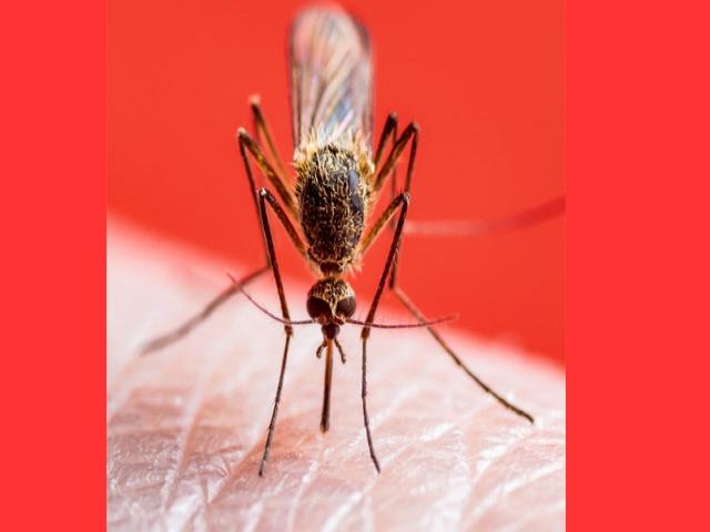 Batı Nil Virüsü kuzeye yayılıyor