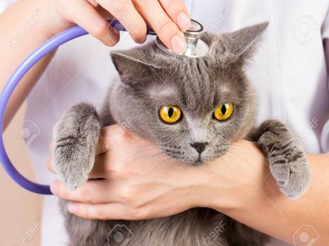 Kediden corona virüsü geçmez uyarısı