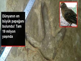 19 milyon yıl önce yaşayan bir metrelik papağan fosili
