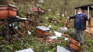 Bartın'da arı kovanlarına zarar veren ayılar açtıkları peteklerdeki balı yedi