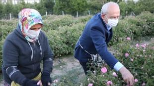CHP Genel Başkanı Kemal Kılıçdaroğlu, Isparta'da gül hasadına katıldı