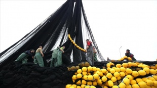 Doğu Karadenizli balıkçılar ağlarını toplamaya başladı