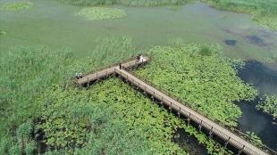 Efteni Gölü Kuş Cenneti kademeli normalleşmeyle 'sessizliğini' bozdu