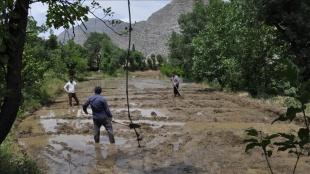 Hakkari'nin Irak sınırında imece usulüyle çeltik ekimi başladı
