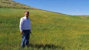İç Anadolu'da kuraklık hububat üreticilerini endişelendiriyor