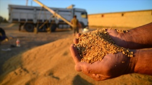İklim değişikliği tarım sektöründe verimi etkileyecek