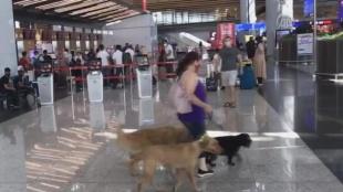 İstanbul Havalimanı'nda ücretsiz evcil hayvan odası 24 saat hizmet veriyor