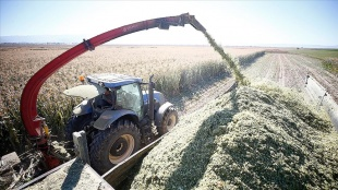 Kayseri'de silajlık mısır çiftçinin yüzünü güldürüyor