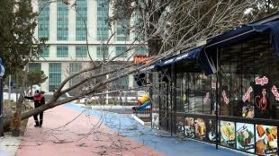 Kırıkkale, Kayseri, Kırşehir ile Niğde'de sıkıntı dolayısıyla ağaçlar devrildi