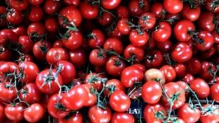 Rusya, Antalya ve İzmir'den domates ve biber ithalatı kısıtlamasını kaldırdı