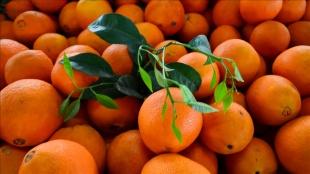 Rusya'ya turunçgil ihracatı yılın ilk çeyreğinde yüzde 9 artışla 117,6 milyon dolar oldu