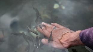 Sivas'ın 'doktor balıkları' Kalkım Kaplıcaları'nda da şifa dağıtacak