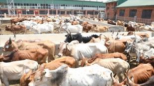 Türkiye Diyanet Vakfı, Uganda'daki 1 milyon 200 bin kişiye kurban eti ulaştıracak