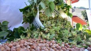 Türkiye fındık, kiraz, incir, kayısı, ayva ve haşhaş üretiminde dünyada birinci sırada