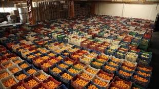 Türkiye'nin 2020'de gözyaşı semere göveri ihracatına 5 mahsul 'damga vurdu'