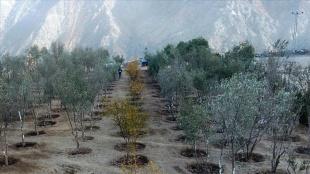 Yusufeli yeni yerleşim adına taşınan 15 bin dikme 111 dekar bölgeye dikildi